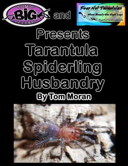 Spiderling-Care-Guide-black-background-416x538.jpg
